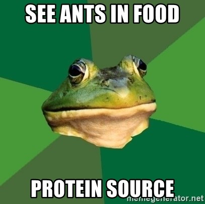 Foul Bachelor Frog - See ants in food Protein Source
