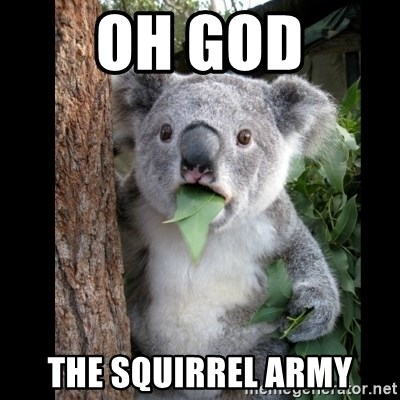 Koala can't believe it - oh god the squirrel army