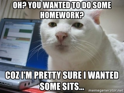 Serious Cat - oh? you wanted to do some homework? coz i'm pretty sure i wanted some sits...