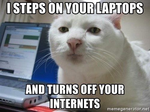 Serious Cat - I steps on your laptops And turns off your internets