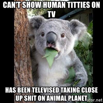 Koala can't believe it - can't show human titties on tv Has been televised taking close up shit on animal planet