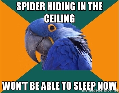 Paranoid Parrot - spider hiding in the ceiling won't be able to sleep now