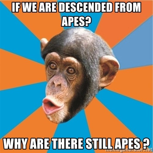 Stupid Monkey - IF WE ARE DESCENDED FROM APES? wHY ARE THERE STILL APES ?