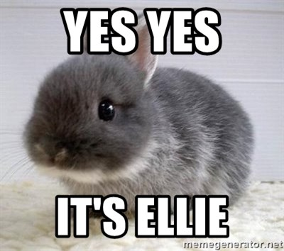 ADHD Bunny - Yes yes  It's ellie