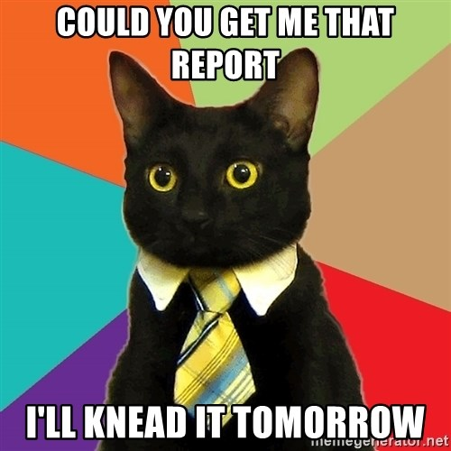 Business Cat - could you get me that report I'll knead it tomorrow