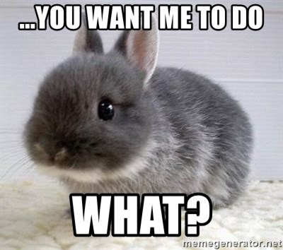ADHD Bunny - ...you want me to do  What?
