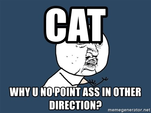 Y U No - cat why u no point ass in other direction?