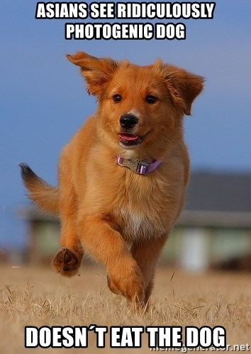 Ridiculously Photogenic Puppy - asians see ridiculously photogenic dog doesn´t eat the dog