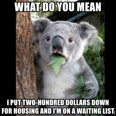 Koala can't believe it - What do you meAN i put two-hundred dollars down for housing and i'm on a waiting list