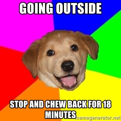 Advice Dog - going outside stop and chew back for 18 minutes