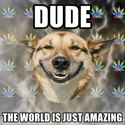 Stoner Dog - dude the world is just amazing