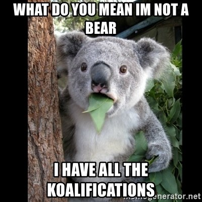 Koala can't believe it - What do you mean im not a bear I have all the Koalifications
