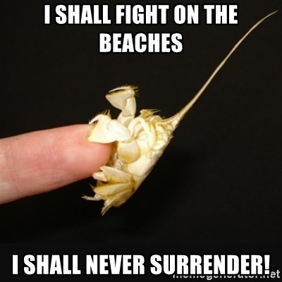 Fighty crab - I shall fight on the beaches i shall never surrender!