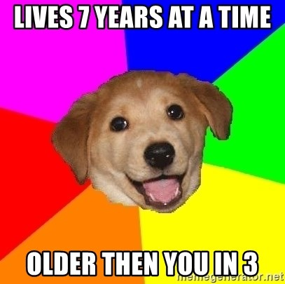 Advice Dog - lives 7 years at a time older then you in 3