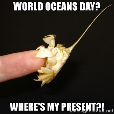 Fighty crab - World Oceans Day? Where's my present?!