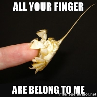 Fighty crab - all your finger are belong to me