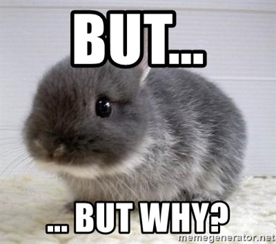 ADHD Bunny - but... ... but why?