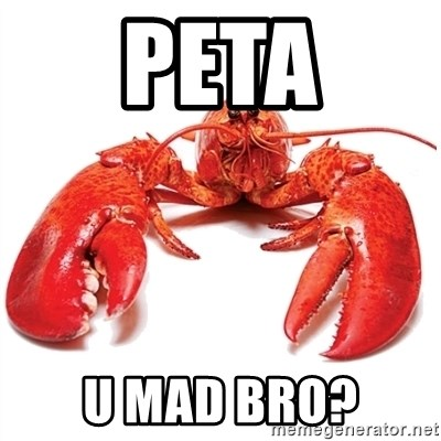 Unable to Relax and Have Fun Lobster - PETA U MAD BRO?