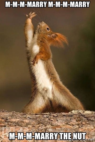 dramatic squirrel - m-m-m-marry m-m-m-marry m-m-m-marry the nut