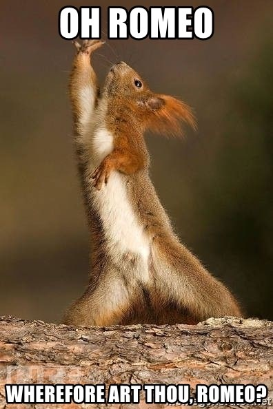dramatic squirrel - Oh Romeo Wherefore Art Thou, Romeo?