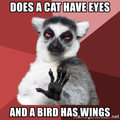 Chill Out Lemur - does a cat have eyes and a bird has wings