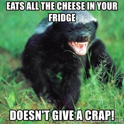 Honey Badger Actual - eats all the cheese in your fridge doesn't give a crap!