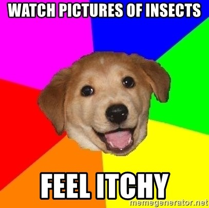 Advice Dog - watch pictures of insects feel itchy