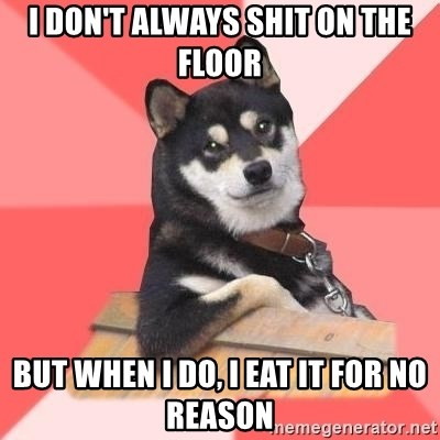 Cool Dog - i don't always shit on the floor but when i do, i eat it for no reason