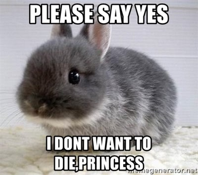 ADHD Bunny - PLEASE SAY YES I DONT WANT TO DIE,PRINCESS