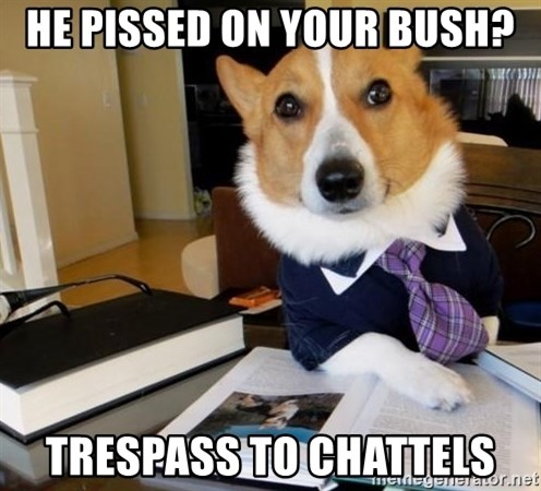Dog Lawyer - he pissed on your bush? trespass to chattels