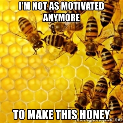 Honeybees - i'm not as motivated anymore to make this honey