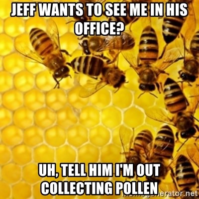 Honeybees - jeff wants to see me in his office? uh, tell him i'm out collecting pollen