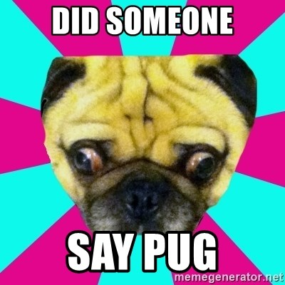 Perplexed Pug - DID SOMEONE SAY PUG