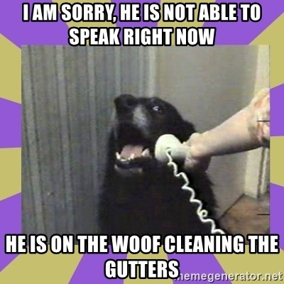 Yes, this is dog! - I am sOrry, he Is not able to spEak right now He is on thE woof cleaning the gutters