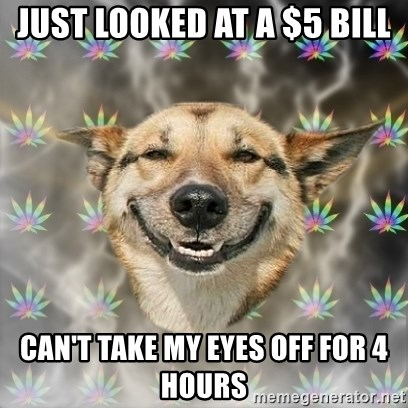 Stoner Dog - just looked at a $5 bill can't take my eyes off for 4 hours