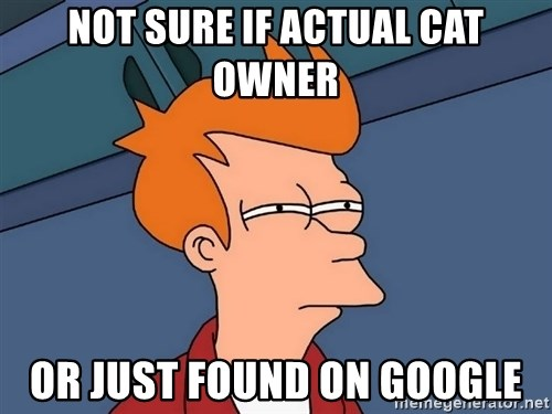 Futurama Fry - not sure if actual cat owner or just found on google