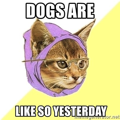 Hipster Kitty - dogs are  like so yesterday