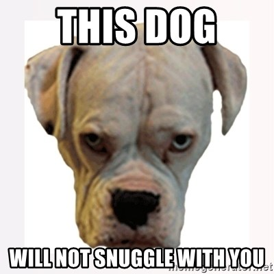 stahp guise - this dog  will not snuggle with you