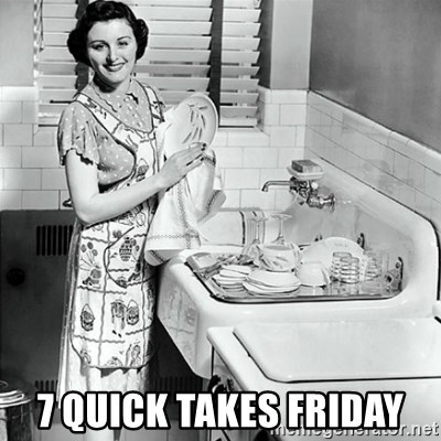 50s Housewife - 7 Quick takes friday