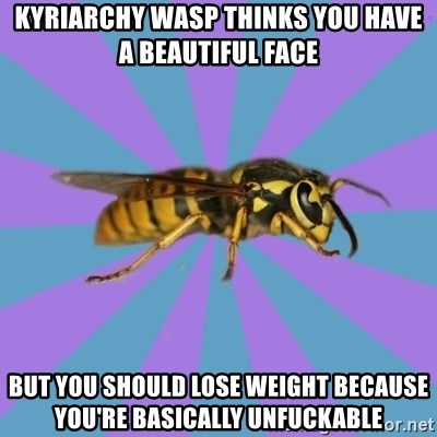 kyriarchy wasp - Kyriarchy wasp thinks you have a beautiful face but you should lose weight because you're basically unfuckable
