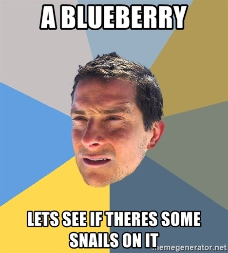 Bear Grylls - a blueberry lets see if theres some snails on it