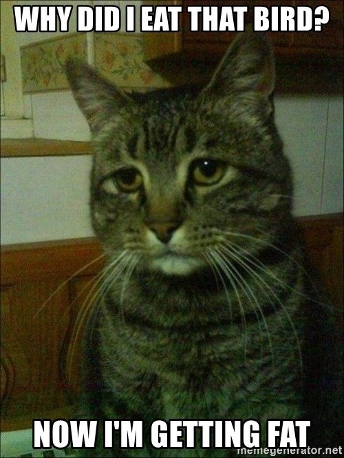 Depressed cat 2 - WHY did I EAT THAT BIRD? NOW I'M GETTING FAT