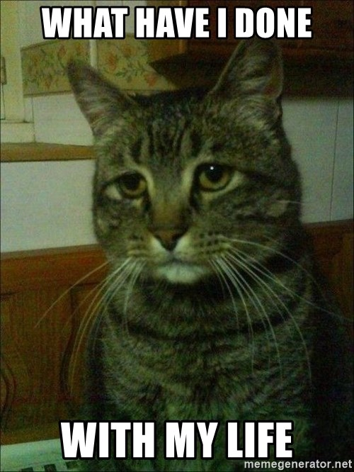 Depressed cat 2 - What have i done  with my life