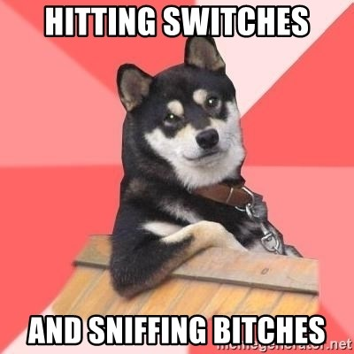 Cool Dog - hitting switches and sniffing bitches