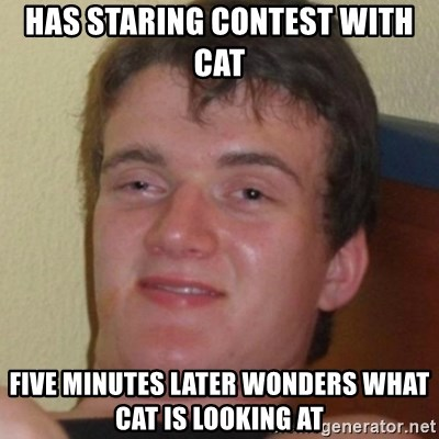 Stoner Guy - Has staring contest with cat five minutes later wonders what cat is looking at