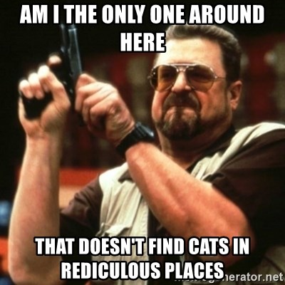 john goodman - am i the only one around here that doesn't find cats in rediculous places