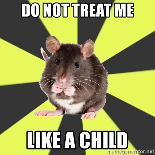 Survivor Rat - do not treat me like a child