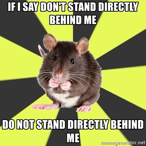 Survivor Rat - If I say don't stand directly behind me Do not stand directly behind me