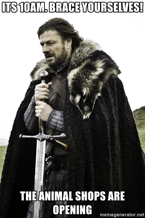Ned Stark - its 10am. Brace yourselves! the animal shops are opening