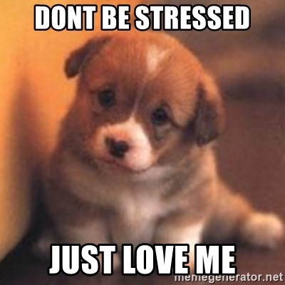cute puppy - DOnt be stressed Just love me